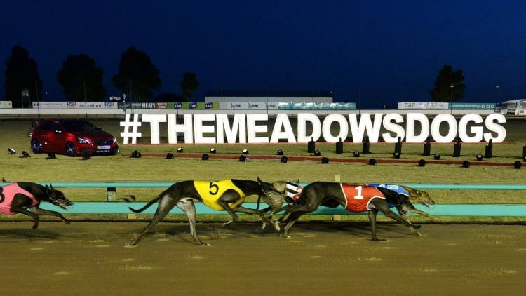 27/6/20 – Saturday Greyhound Racing Tips for The Meadows
