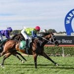 warrnambool horse racing tips