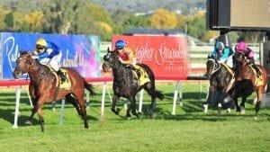 wagga horse racing tips