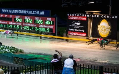 16/10/20 – Friday Greyhound Racing Tips for Wentworth Park