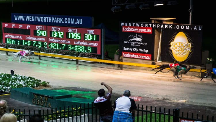 1/8/20 – Saturday Greyhound Racing Tips for Wentworth Park