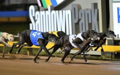 Sandown Park Greyhound Tips